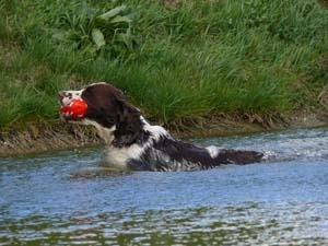 pluto-schwimmen
